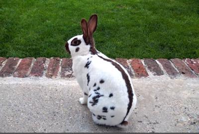 Kaninchen Vom Garten Fern Halten Gartenfrase Expertegartenfrase Experte